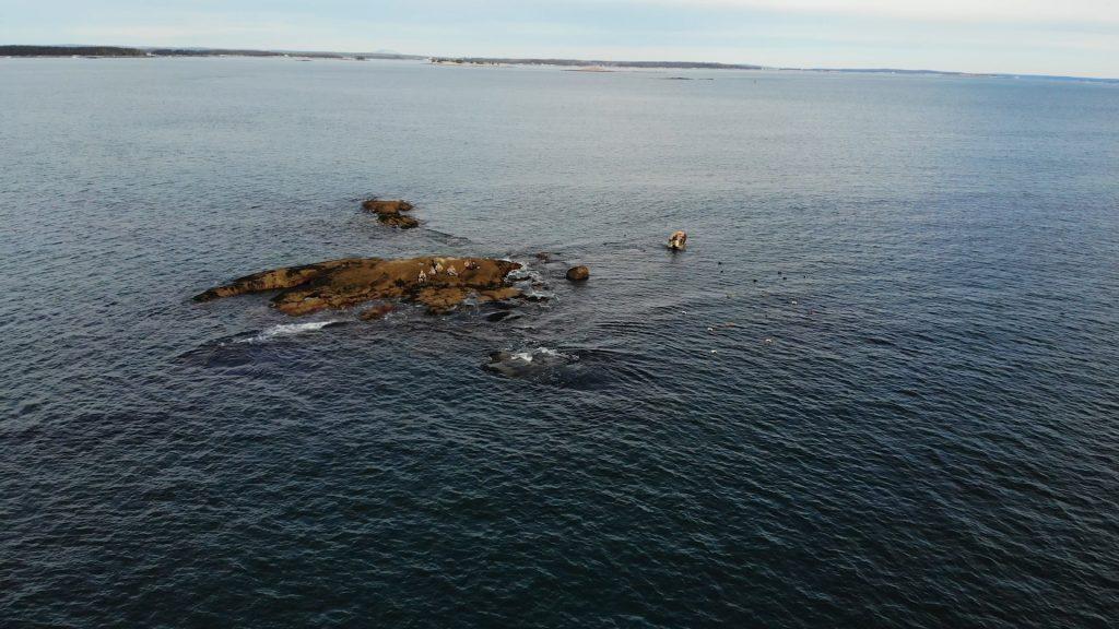 Atlantic Ocean rock ledge hunting sea ducks